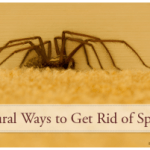 How To Naturally Keep Spiders Away