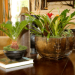 Top 10 Plants For Removing Home Toxins