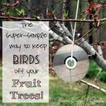 Easy Way to Keep Birds Off Your Fruit Trees